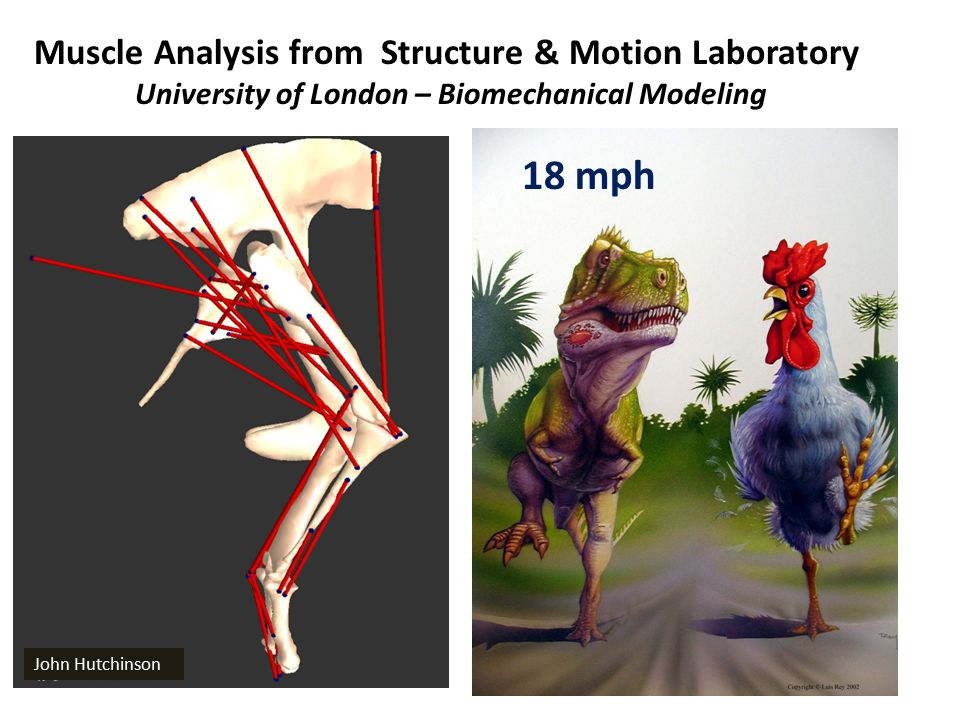 University of London – Biomechanical Modeling