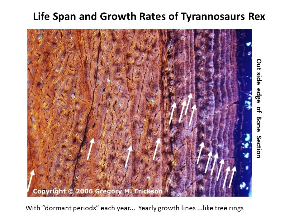 Life Span and Growth Rates of Tyrannosaurs Rex