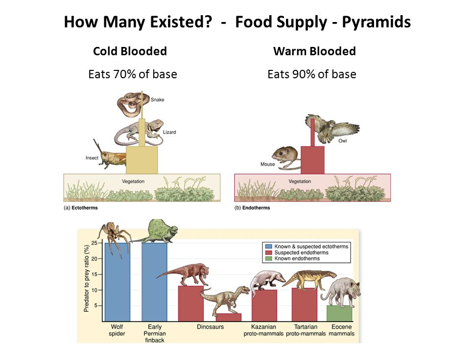How Many Existed - Food Supply - Pyramids