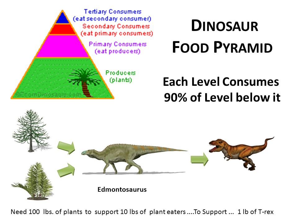 Dinosaur Food Pyramid Each Level Consumes 90% of Level below it
