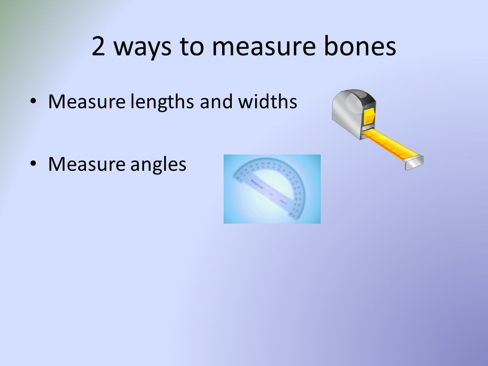 2 ways to measure bones Measure lengths and widths Measure angles
