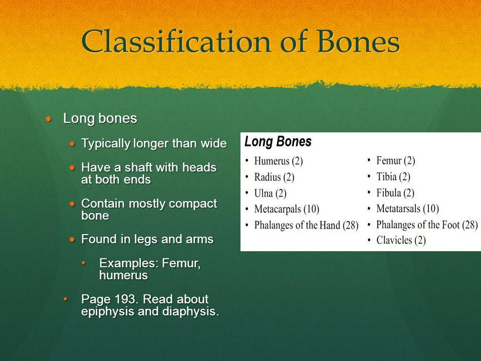 Classification of Bones