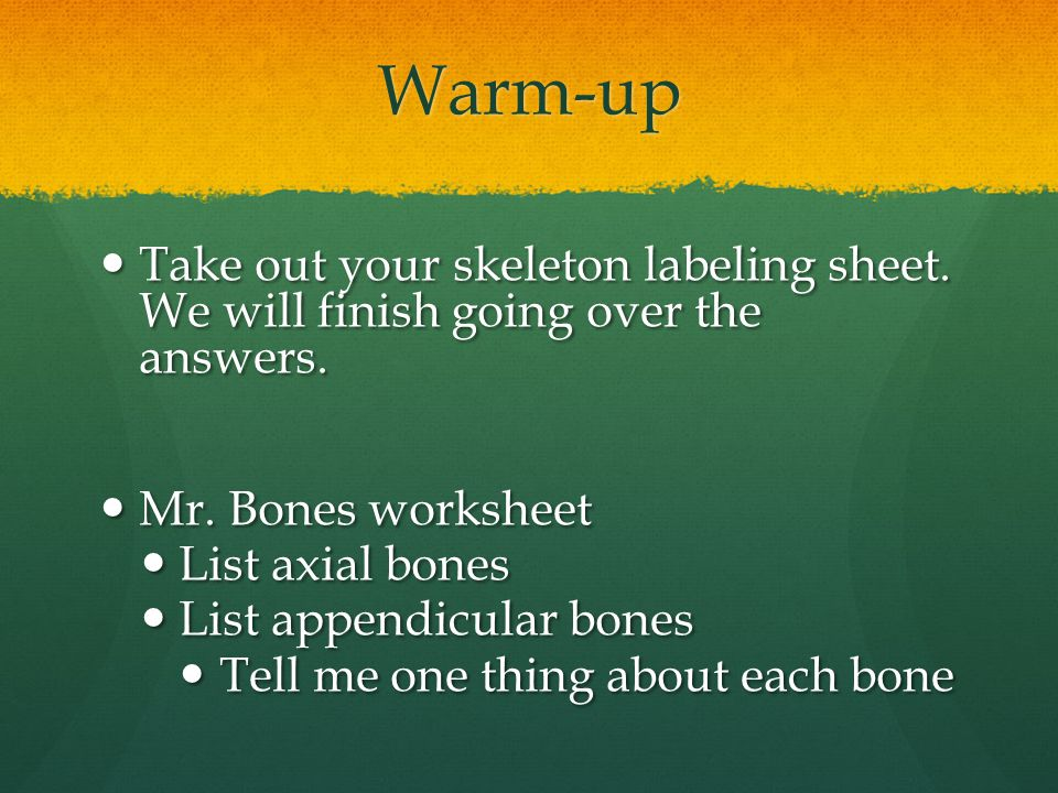 Warm-up Take out your skeleton labeling sheet. We will finish going over the answers. Mr. Bones worksheet.