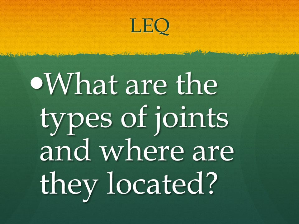 What are the types of joints and where are they located