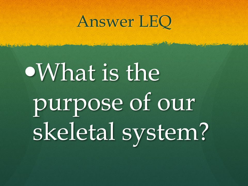 What is the purpose of our skeletal system