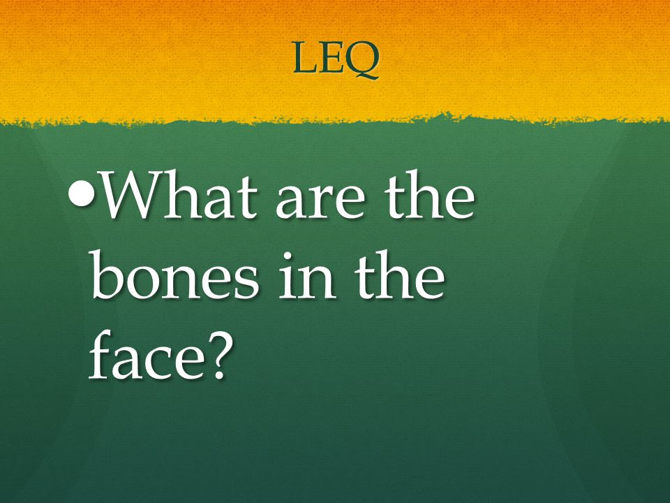 What are the bones in the face