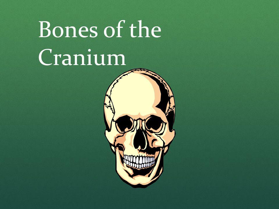 Bones of the Cranium