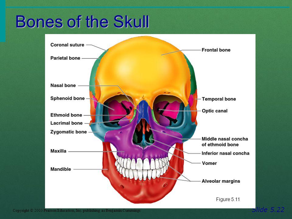 Bones of the Skull Slide 5.22 Figure 5.11