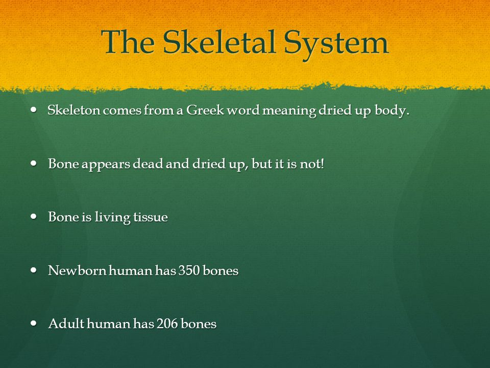 The Skeletal System Skeleton comes from a Greek word meaning dried up body. Bone appears dead and dried up, but it is not!