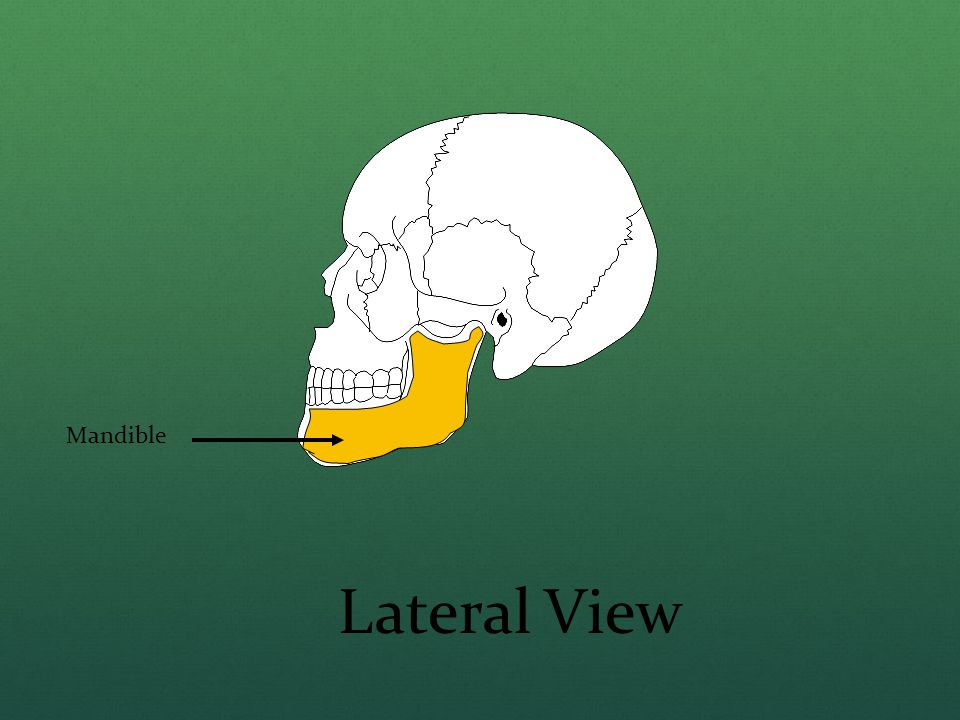 Mandible Lateral View
