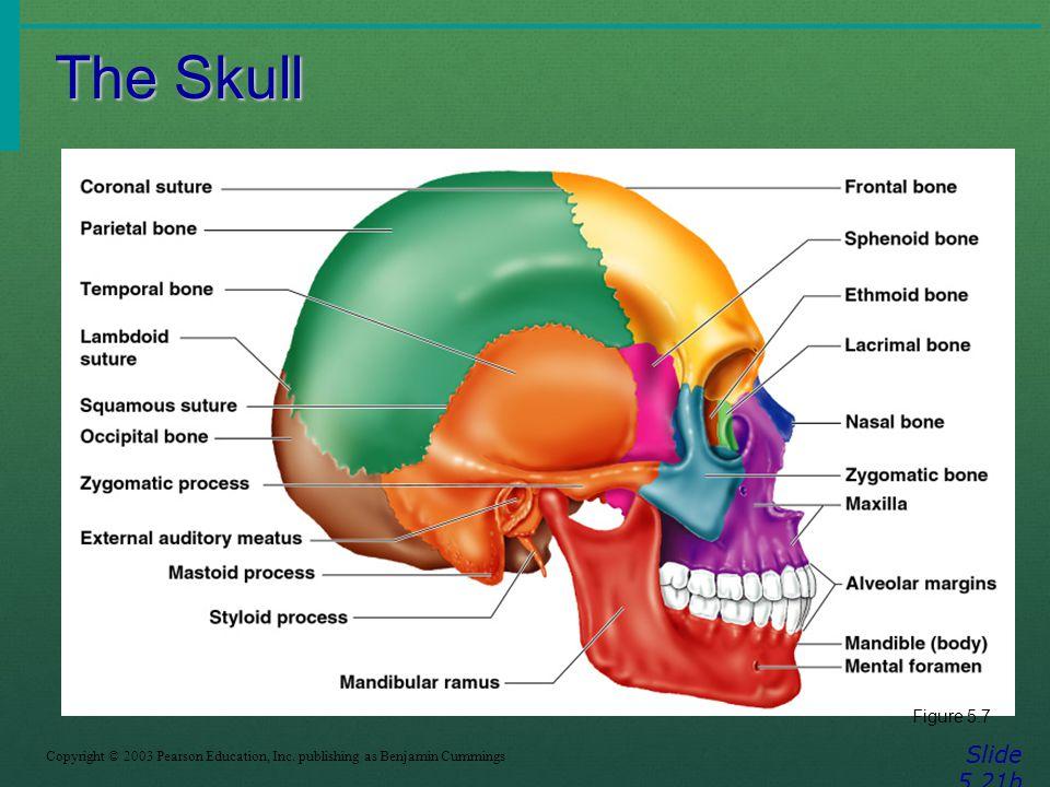 The Skull Slide 5.21b Figure 5.7