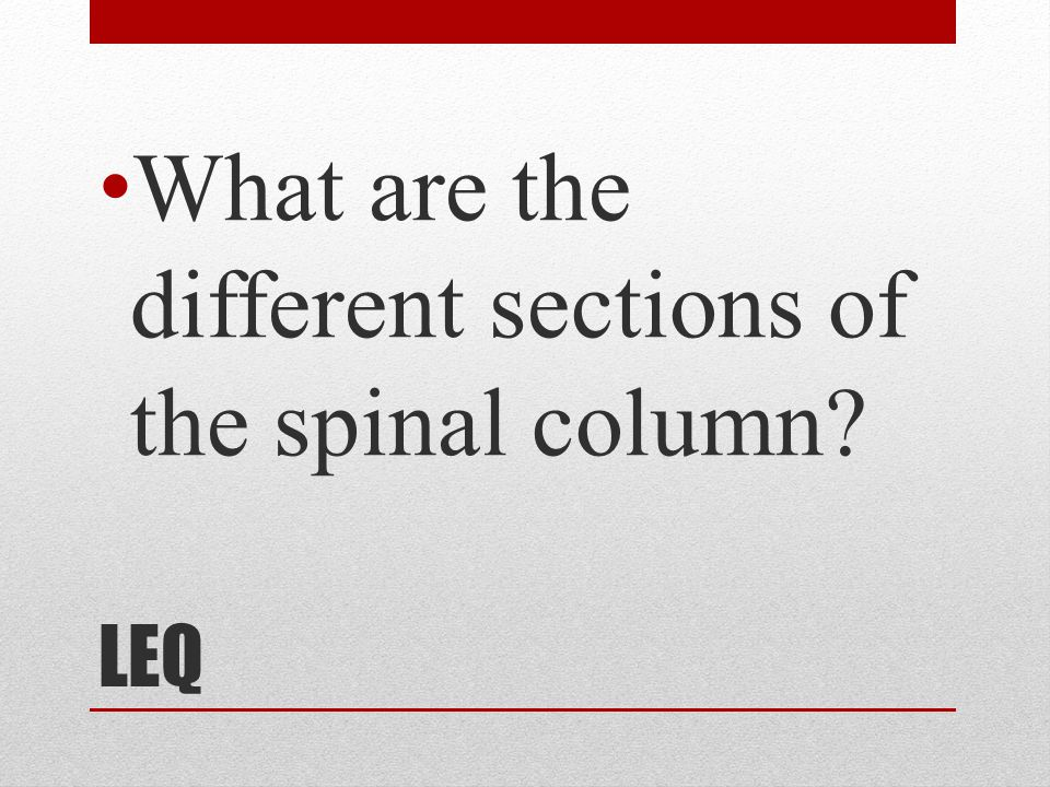 What are the different sections of the spinal column