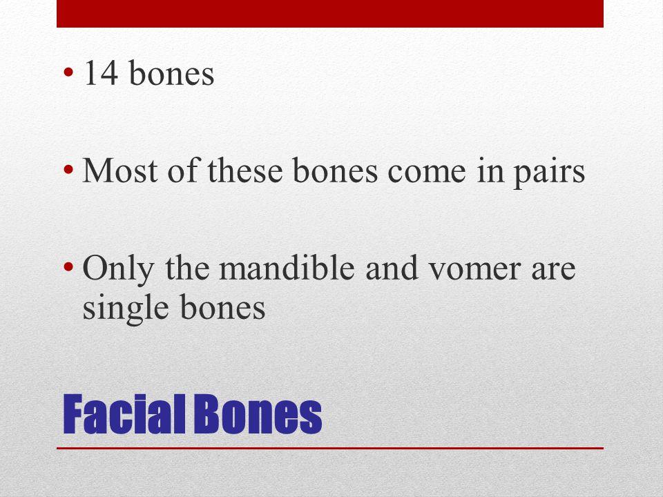 Facial Bones 14 bones Most of these bones come in pairs