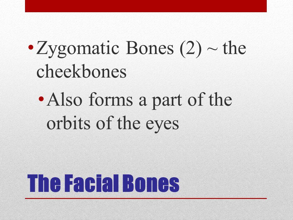 The Facial Bones Zygomatic Bones (2) ~ the cheekbones