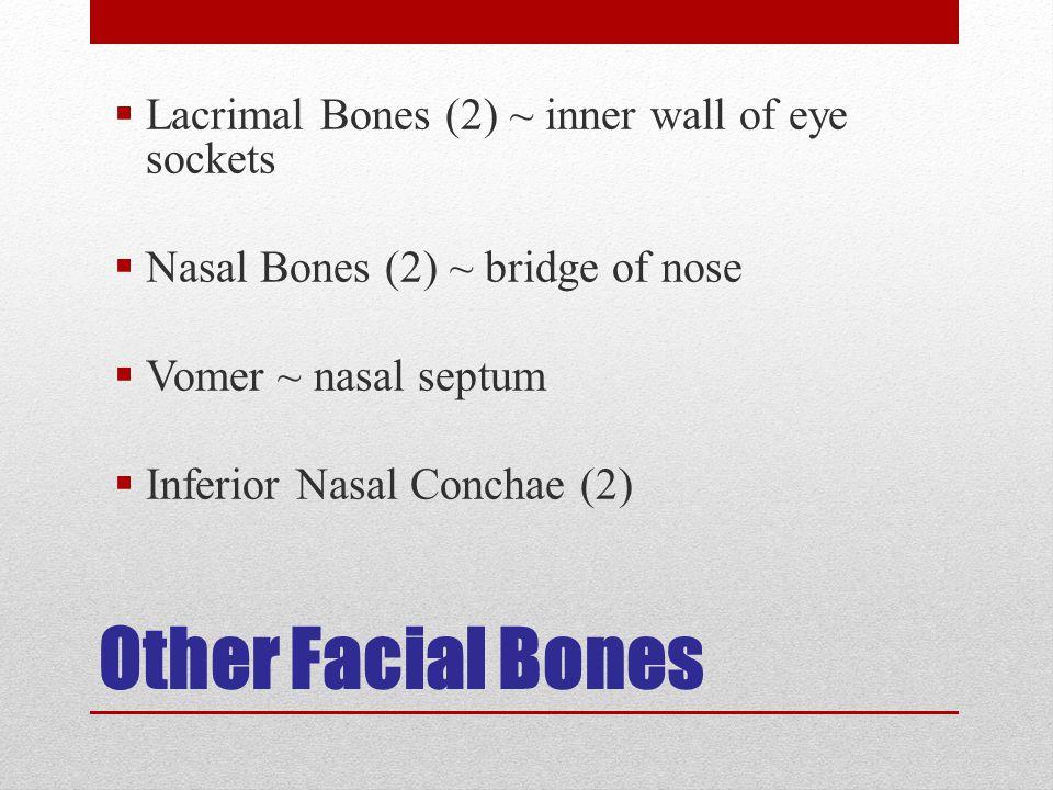 Other Facial Bones Lacrimal Bones (2) ~ inner wall of eye sockets