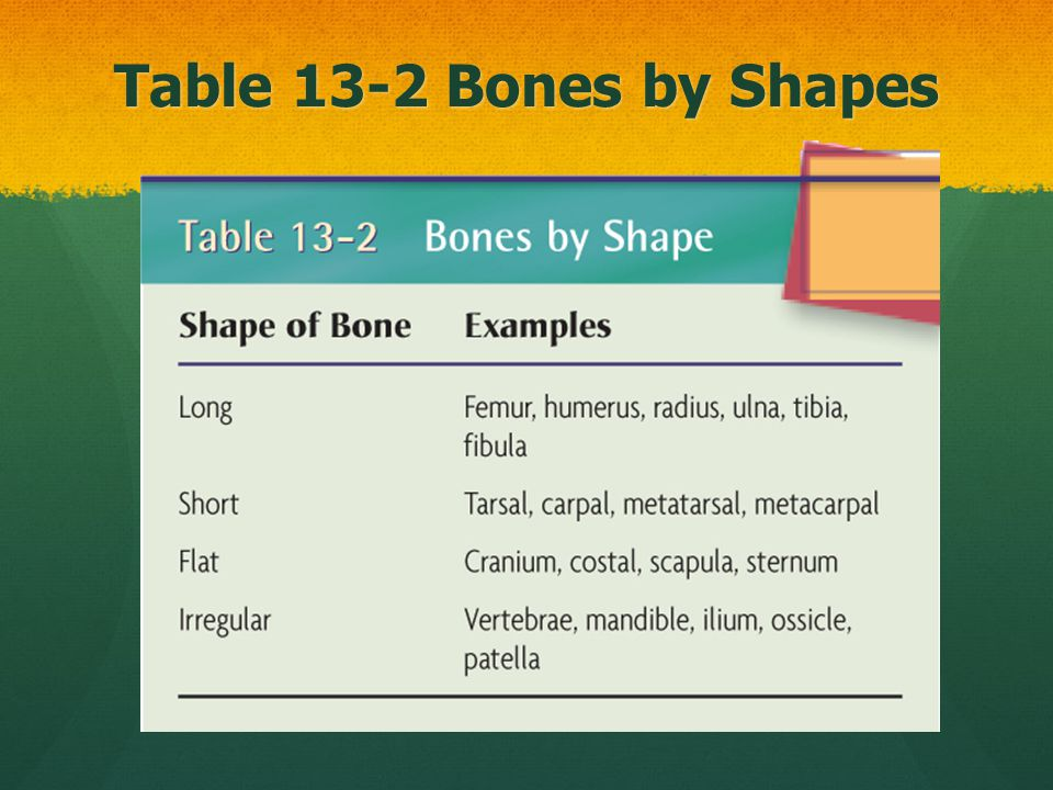 Table 13-2 Bones by Shapes