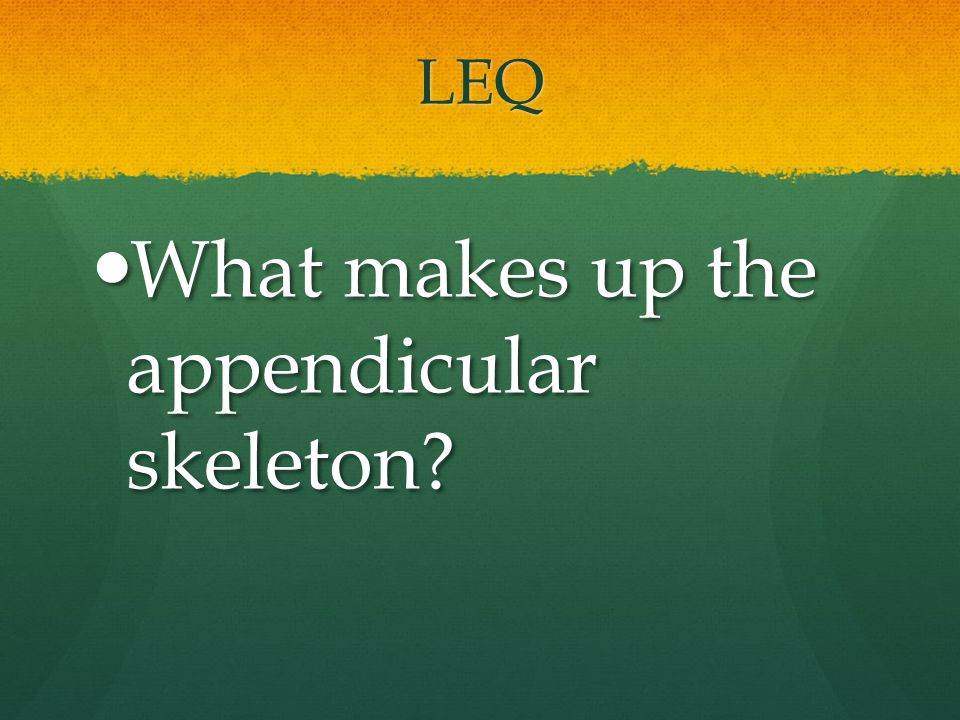 What makes up the appendicular skeleton
