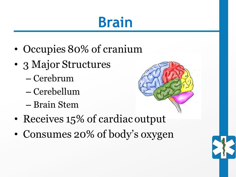 Brain Occupies 80% of cranium 3 Major Structures