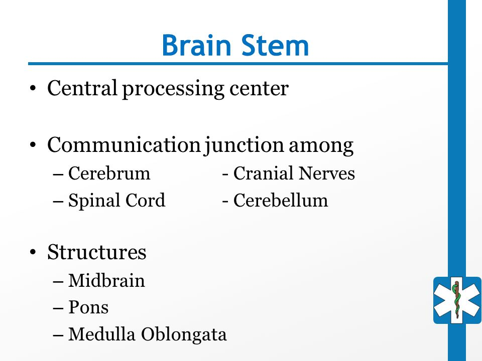 Brain Stem Central processing center Communication junction among