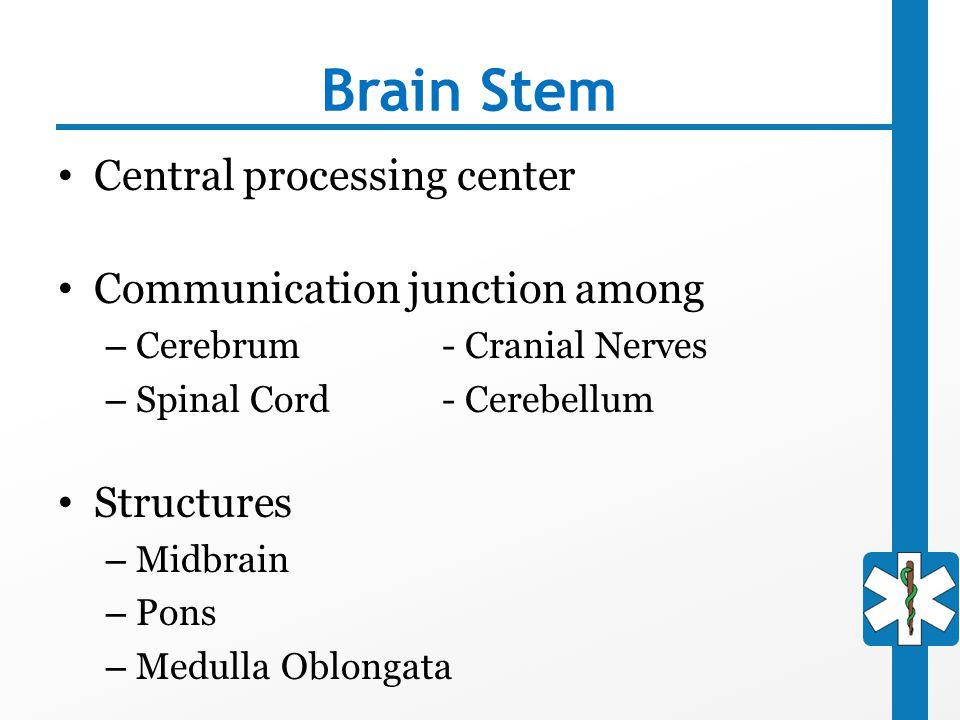 Brain Stem Central processing center Communication junction among
