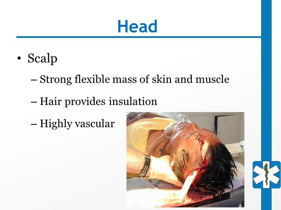 Head Scalp Strong flexible mass of skin and muscle
