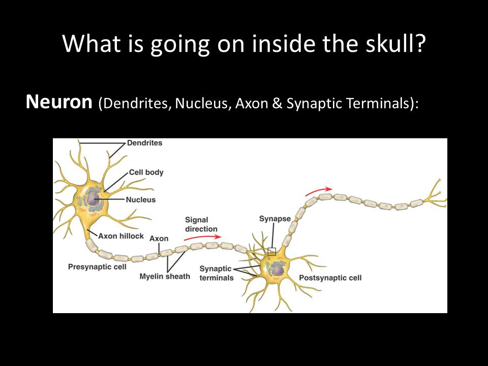 What is going on inside the skull