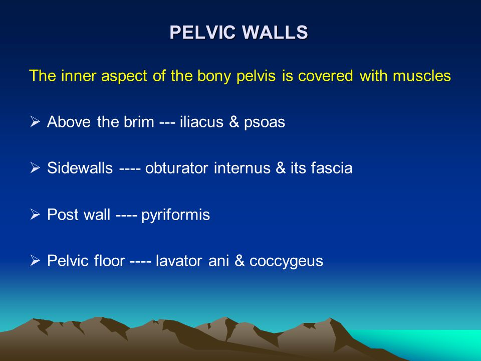 PELVIC WALLS The inner aspect of the bony pelvis is covered with muscles. Above the brim --- iliacus & psoas.