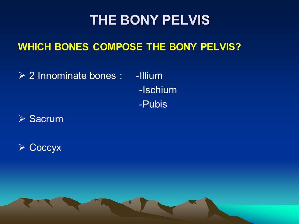 THE BONY PELVIS WHICH BONES COMPOSE THE BONY PELVIS