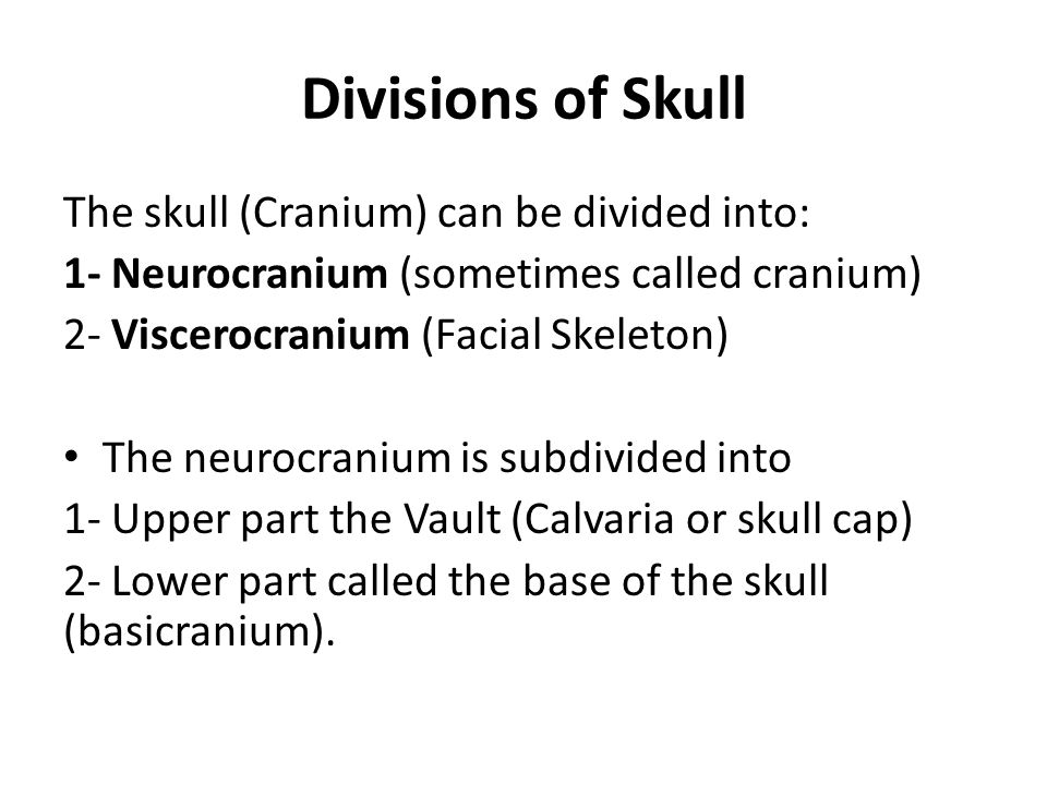 Divisions of Skull The skull (Cranium) can be divided into: