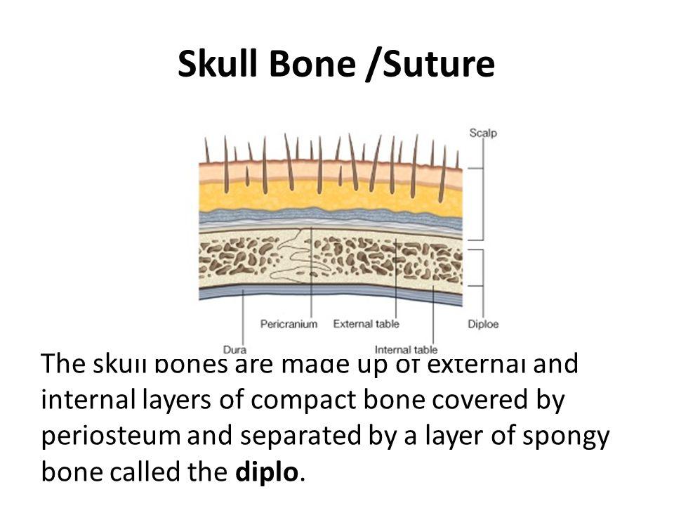 Skull Bone /Suture