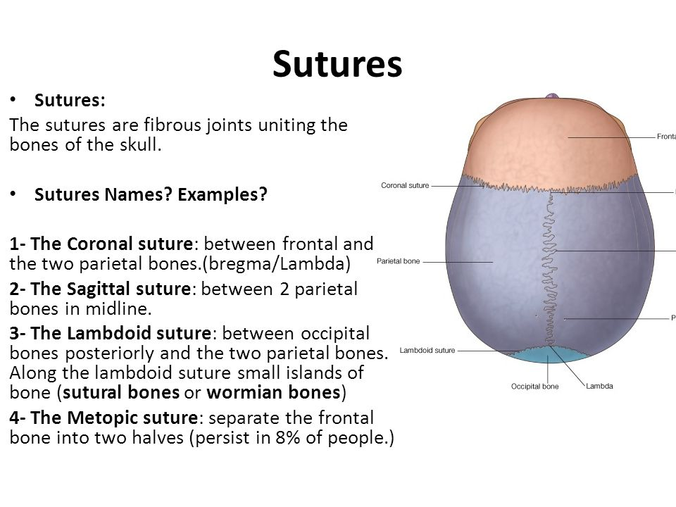 Sutures Sutures: The sutures are fibrous joints uniting the bones of the skull. Sutures Names Examples