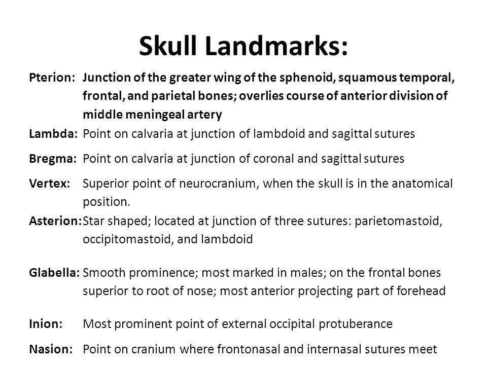 Skull Landmarks: Pterion: