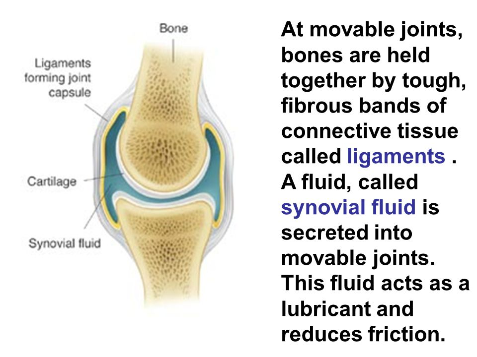 At movable joints, bones are held together by tough, fibrous bands of connective tissue called ligaments .