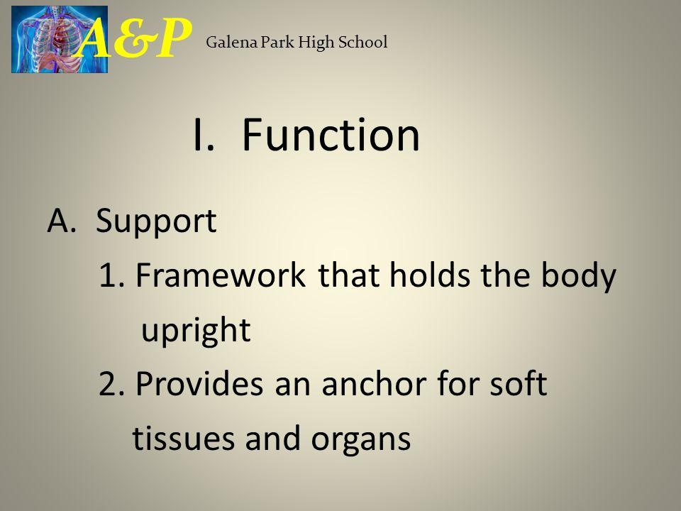 A&P Galena Park High School. I. Function. A.