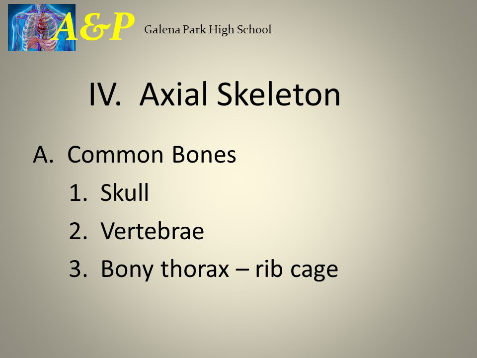A&P Galena Park High School. IV. Axial Skeleton.
