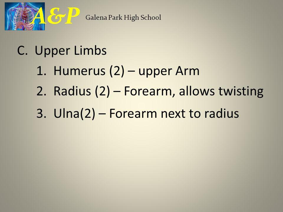 A&P Galena Park High School. C. Upper Limbs 1. Humerus (2) – upper Arm 2.