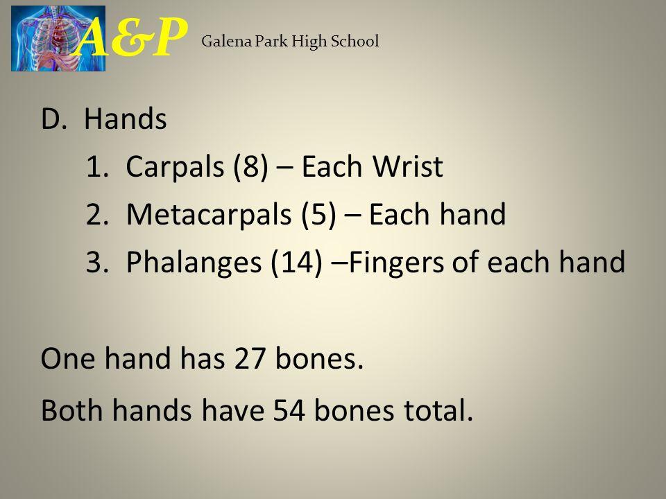 A&P Galena Park High School.