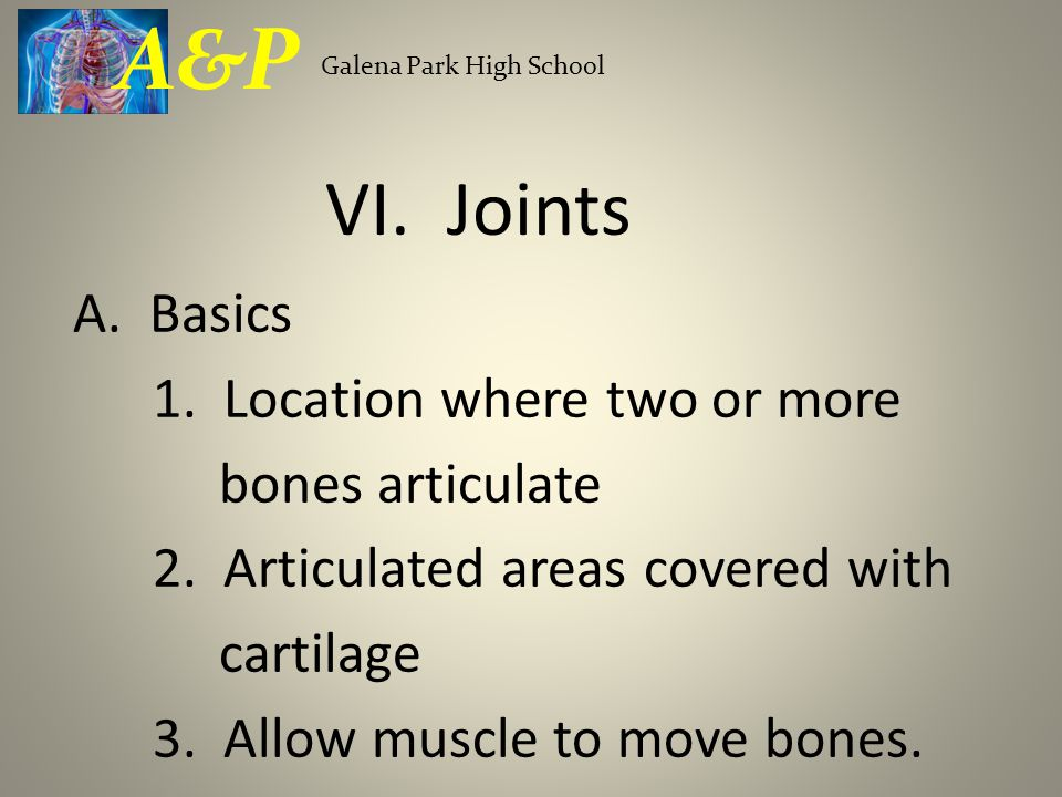 A&P Galena Park High School. VI. Joints.