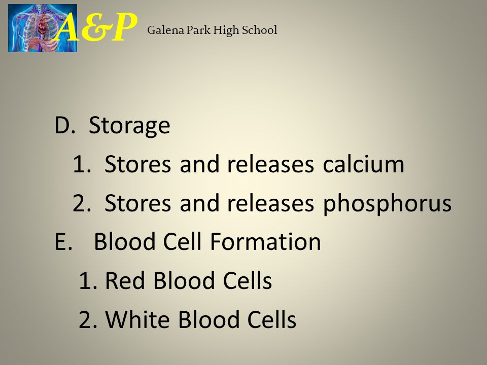 A&P D. Storage 1. Stores and releases calcium