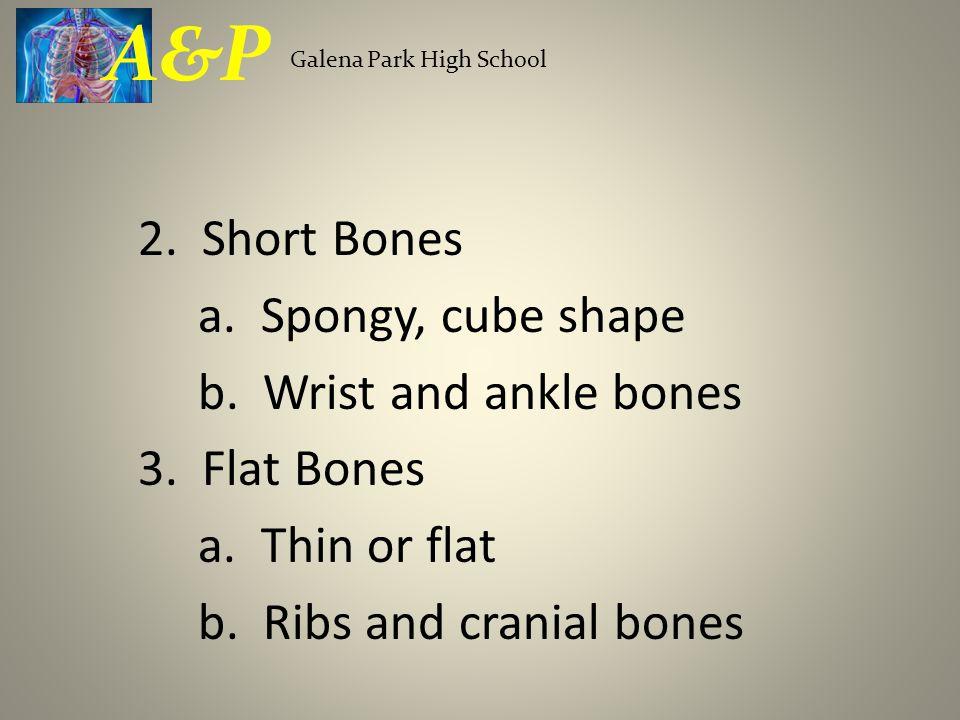 A&P Galena Park High School. 2. Short Bones a. Spongy, cube shape b.