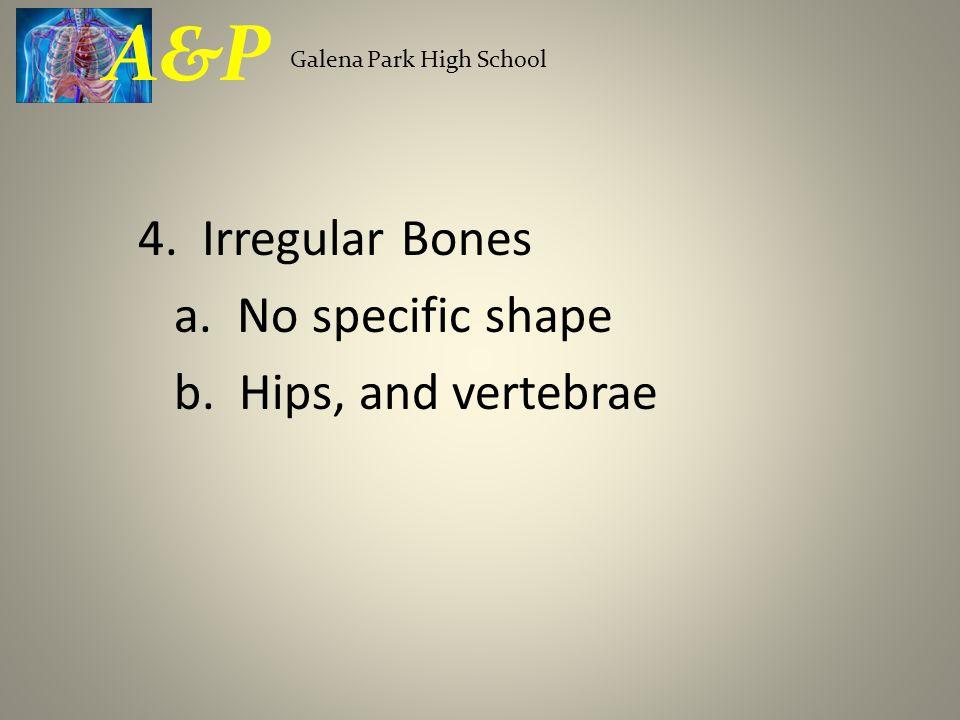 A&P 4. Irregular Bones a. No specific shape b. Hips, and vertebrae