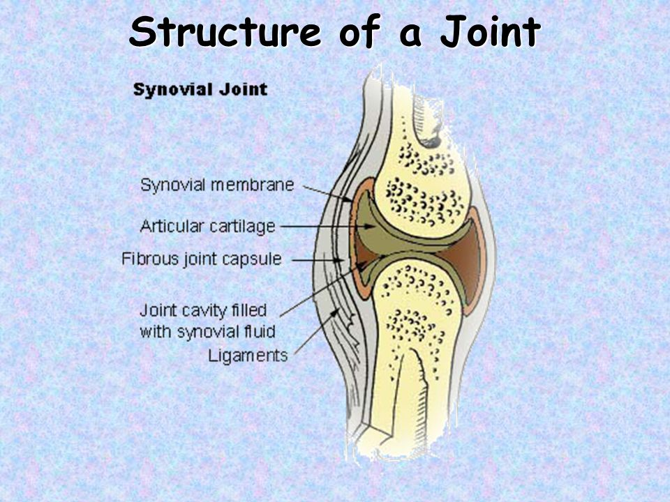 Structure of a Joint