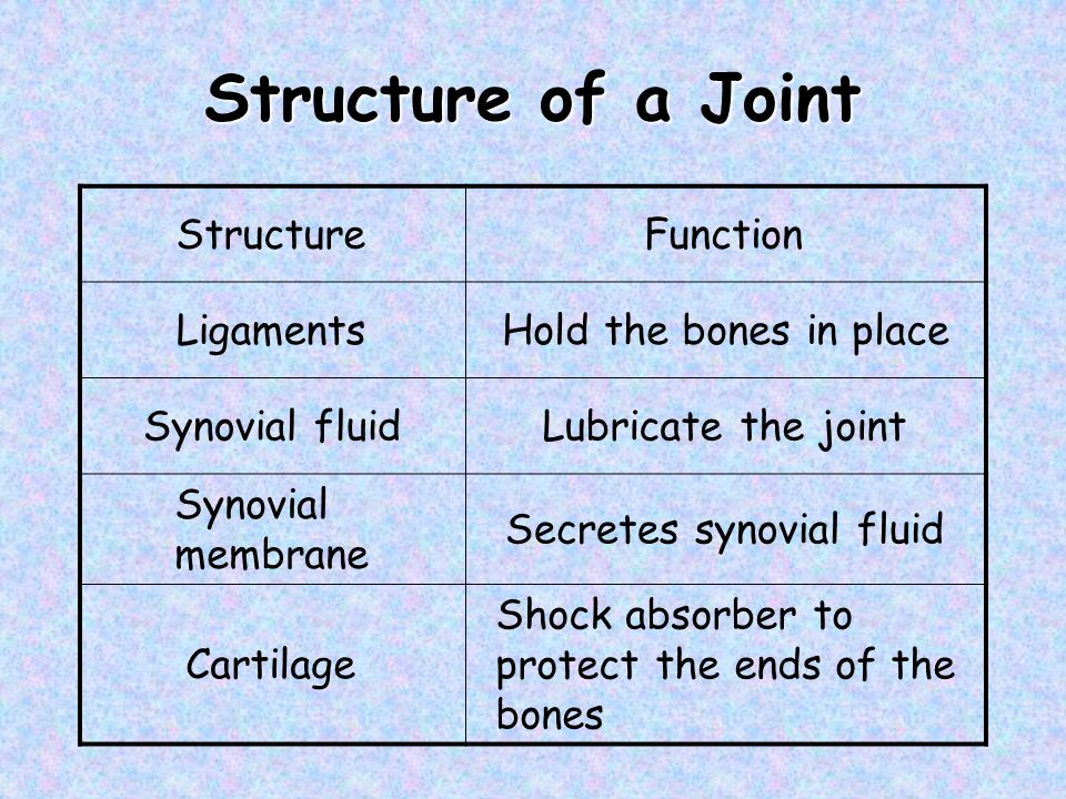 Structure of a Joint Structure Function Ligaments