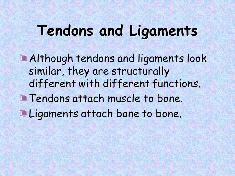 Tendons and Ligaments Although tendons and ligaments look similar, they are structurally different with different functions.