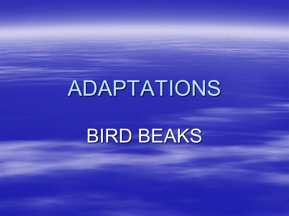 ADAPTATIONS BIRD BEAKS