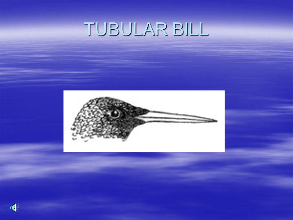 TUBULAR BILL
