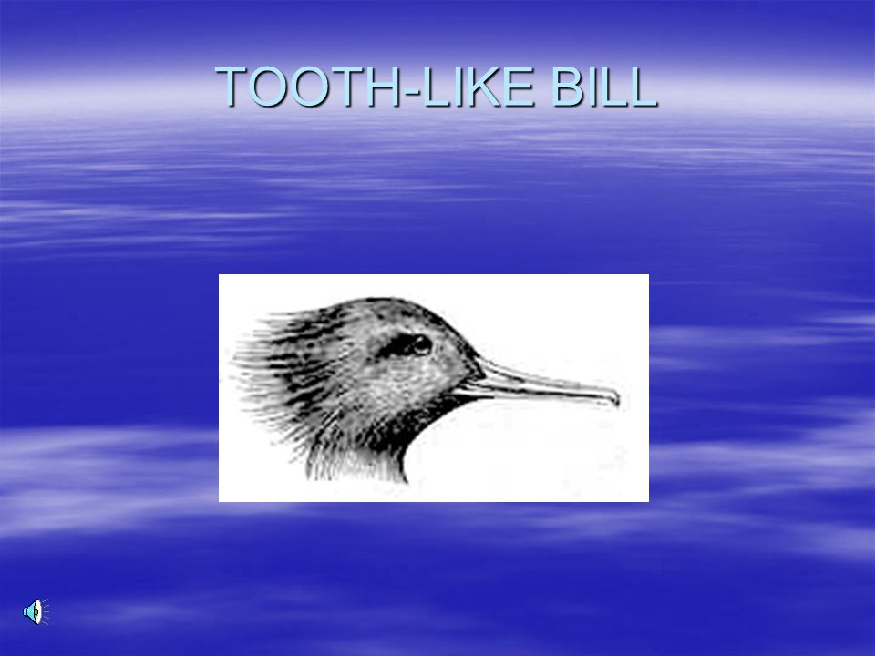 TOOTH-LIKE BILL