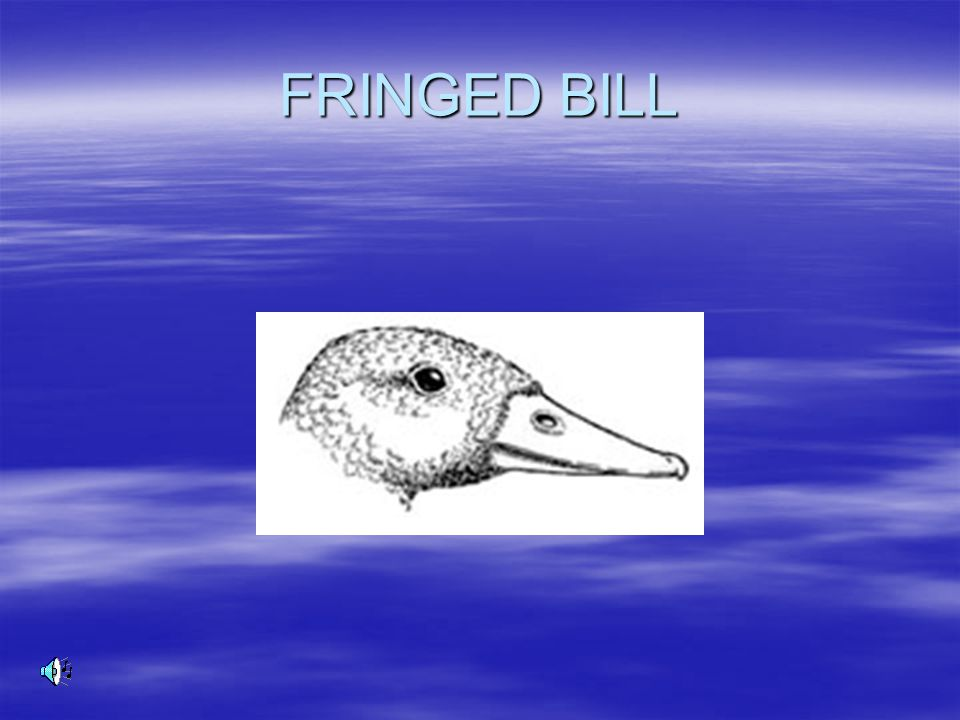 FRINGED BILL