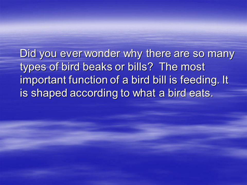 Did you ever wonder why there are so many types of bird beaks or bills