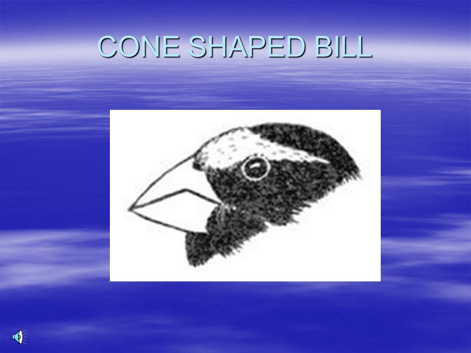 CONE SHAPED BILL